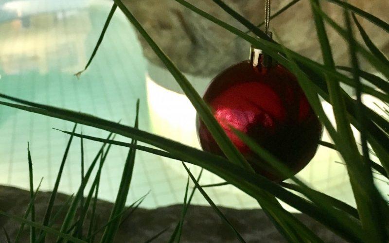 julekule i nordlandsbadet